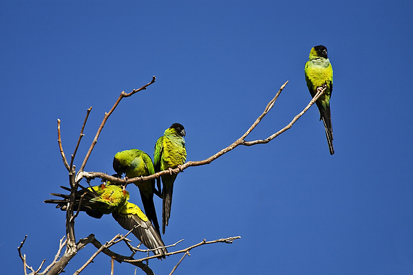 Birds Photograph - Parrot Squabble by Greg Clure