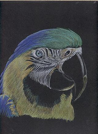 Pets Painting - Parrot Study  by Luke Gandy