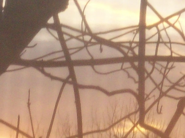 Sunrise Photograph - Pastel Morning by Caitlin Binkhorst