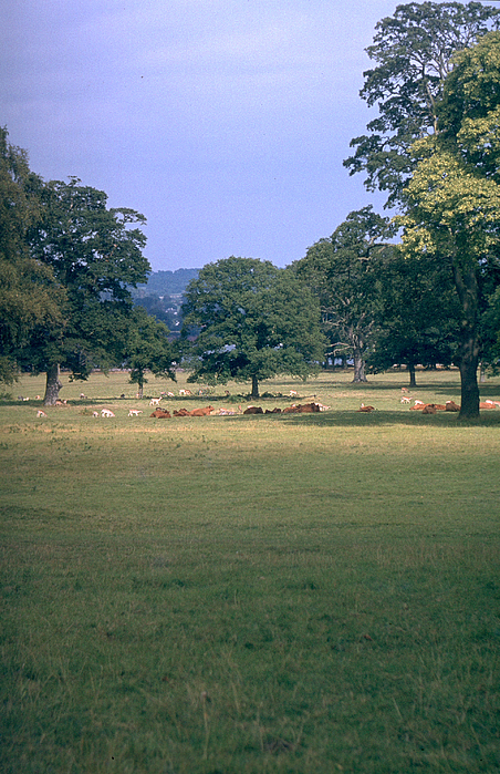 Great Britain Photograph - Pasture by Flavia Westerwelle
