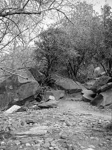Phoenix Photograph - Pathway by Kevin Igo