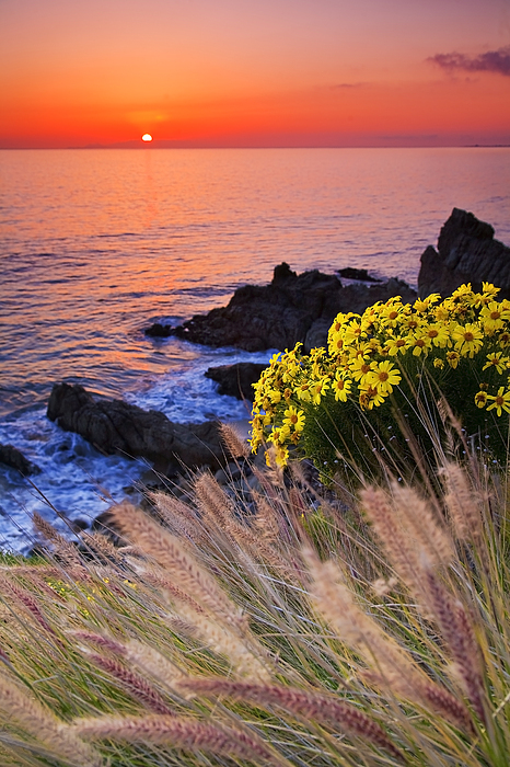 Beaches Photograph - Pch Sunset by Greg Clure