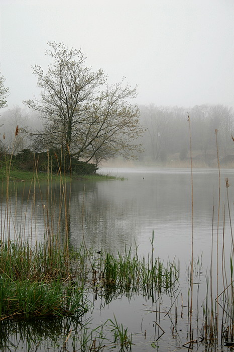 Landscape Photograph - Peaceful by Erika Lesnjak-Wenzel