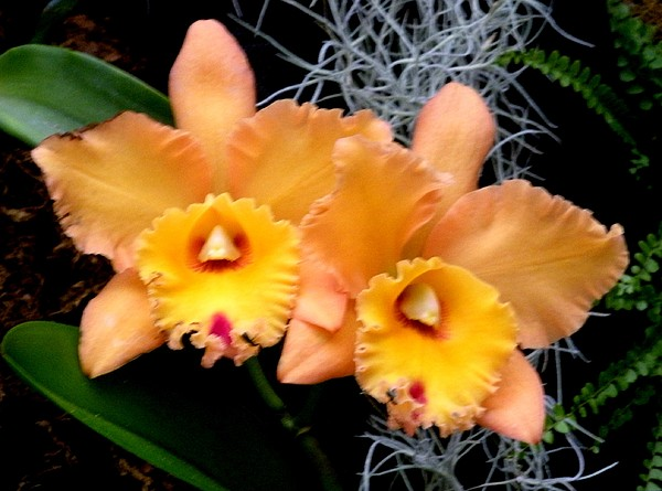 Flowers Photograph - Peachy Couple by Jeanette Oberholtzer
