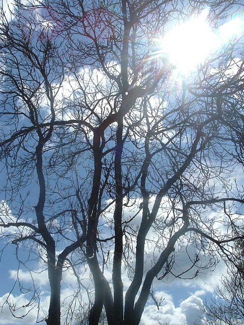 Tree Photograph - Peak Of Heaven by JoAnn Tavani