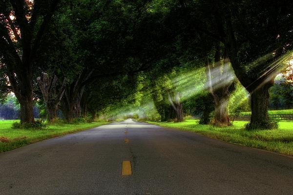 Light Rays Photograph - Pecan Alley Rays - Arkansas - Landscape by Jason Politte