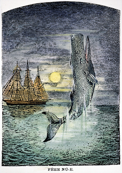 19th Century Photograph - Pehe Nu-e: Moby Dick by Granger