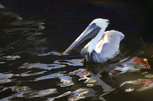 Pelican Photograph - Pelican II Oil Painting by Jody Lovejoy
