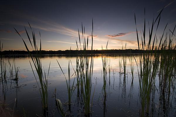 Breezy Photograph - Pelican Lake by Michael Treloar
