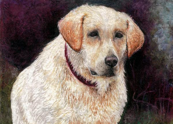 Golden Retriever Drawing - Pensive Golden Retriever by Melissa J Szymanski