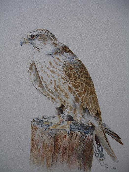 Falcon Painting - Peregrine Falcon by Maruska Lebrun