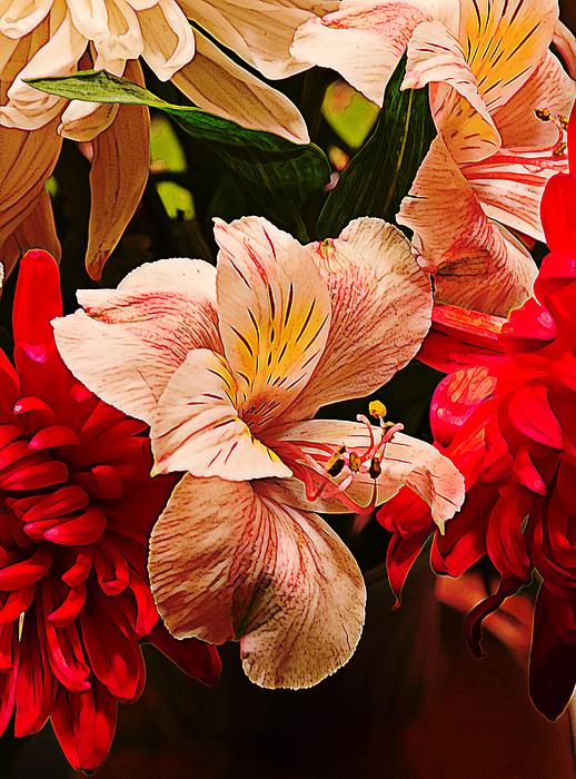Yellow Photograph - Peruvian Lily Grain by Bill Tiepelman