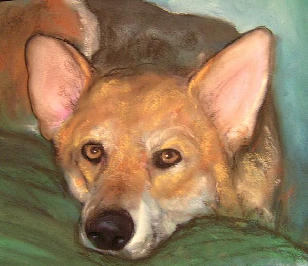 Pastels Painting - Pet Portrait by Darla Joy  Johnson