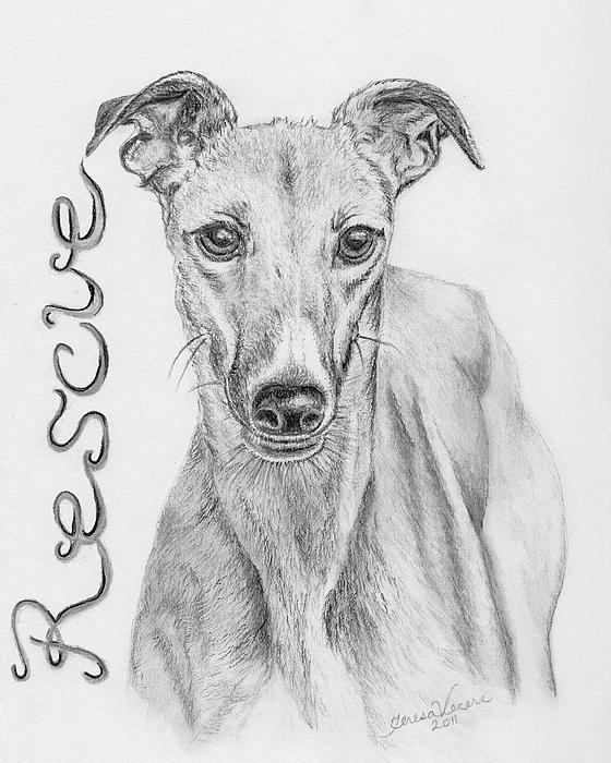 Petunia Drawing by Teresa Vecere