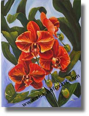 Phaelenopsis Painting by Sharon Fox-Mould