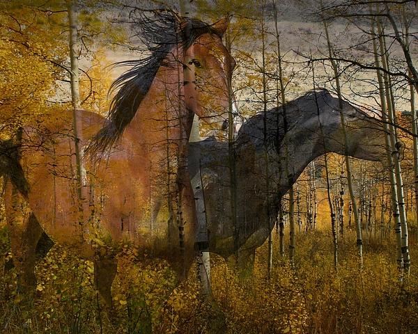 Horse Photograph - Phantom Grove by Gene Praag