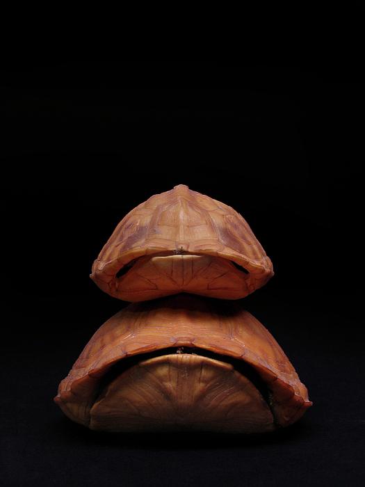 Turtle Photograph - Piggyback Ride by Adam Long