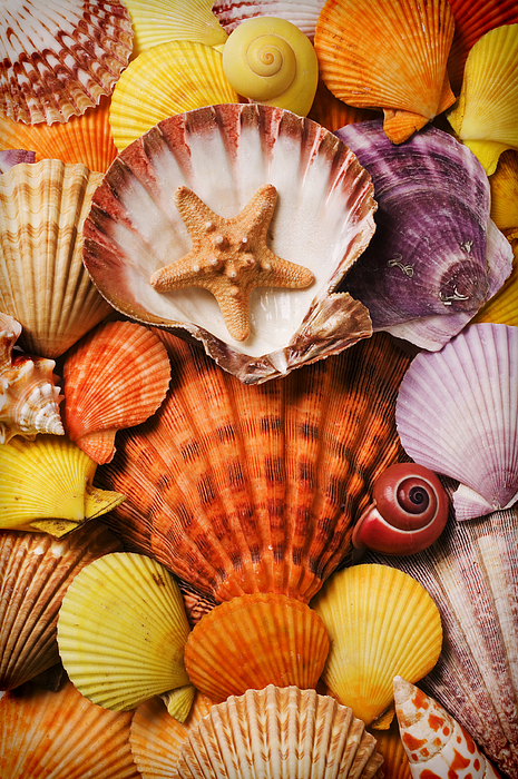Seashells Photograph - Pile Of Seashells by Garry Gay