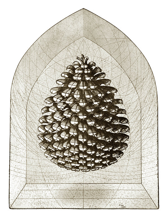 Pine Drawing - Pinecone by Charles Harden