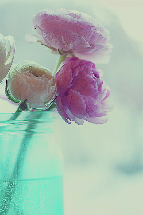 Vertical Photograph - Pink And White Ranunculus Flowers In Vase by Isabelle Lafrance Photography