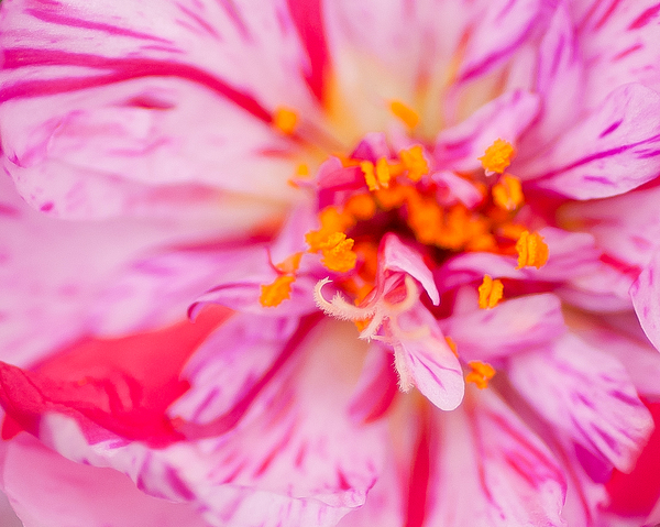 Color Photography Photograph - Pink by David Waldrop