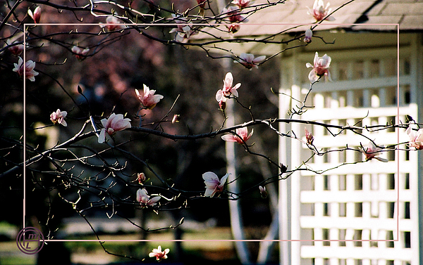 Floral Photograph - Pink Flowers At Gazebo by Helena M Langley