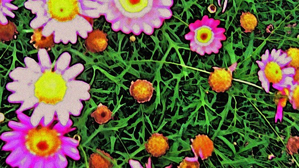 Pink Flowers Digital Art - Pink Flowers by Cassandra Donnelly