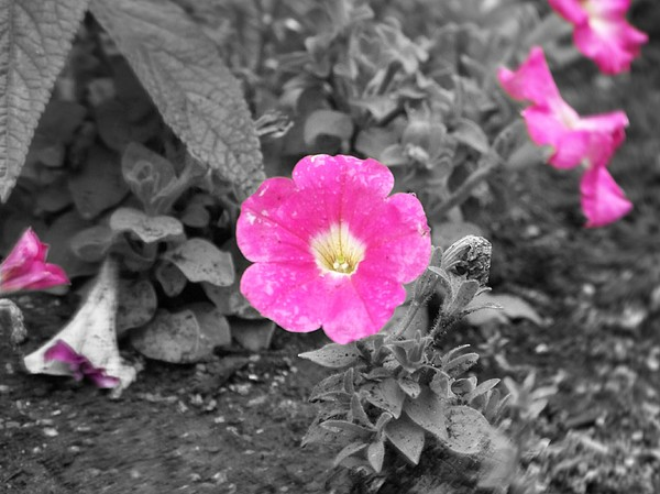 Flowers Photograph - Pink by Jessica Burgett
