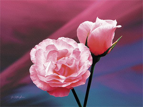 Roses Painting - Pink Roses by Jan Baughman