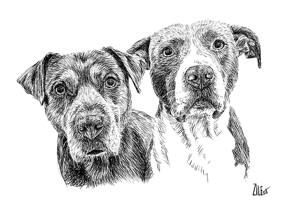 Dog Digital Art - @pitbull.jack.and.miele by ZileArt