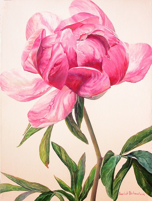 Flower Painting - Pivoine 1 by Muriel Dolemieux