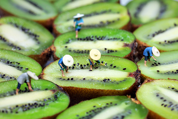 Plant Photograph - Planting Rice On Kiwifruit by Paul Ge