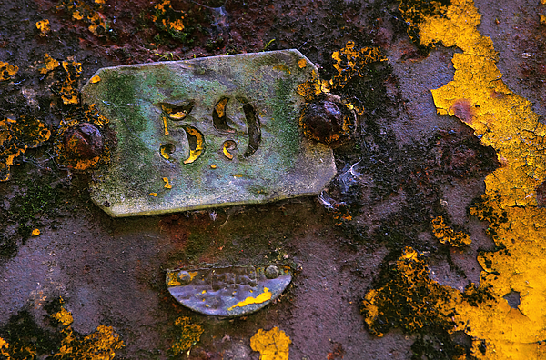 Background Photograph - Plate 59 by Carlos Caetano