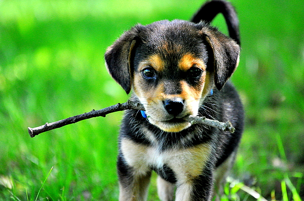 Puppy Photograph - Playtime by Emily Stauring