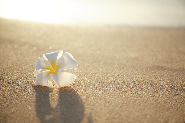 Afternoon Photograph - Plumeria On Beach I by Brandon Tabiolo - Printscapes