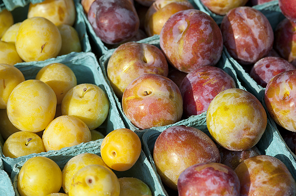 Prunus Photograph - Plums by John Greim