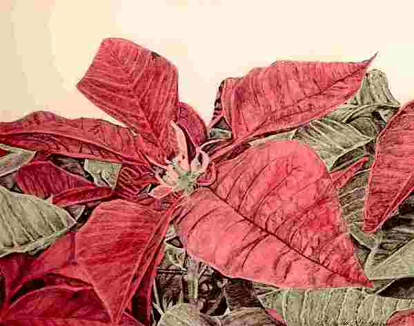 Poinsettia Painting - Poinsettia by Michelle Montague