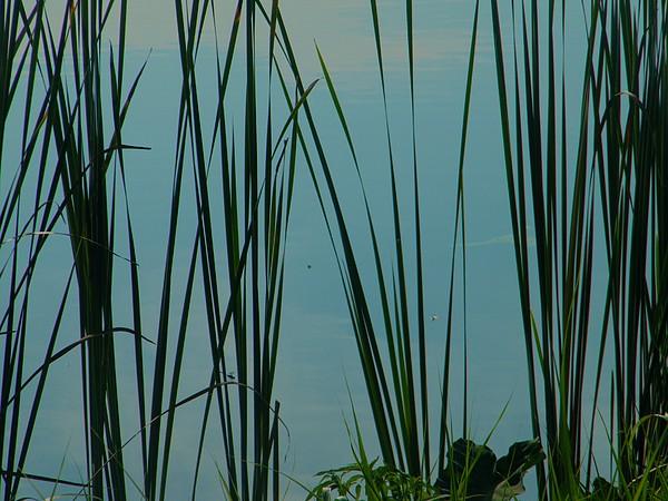 Blue Pond Photograph - Pond by Nereida Slesarchik Cedeno Wilcoxon