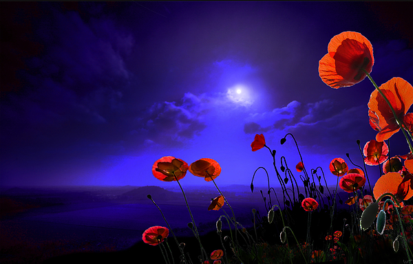 Red Photograph - Poppies Blue by Igor Zenin
