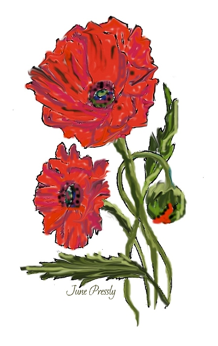 Flowers Painting - poppies by June Pressly by June Pressly