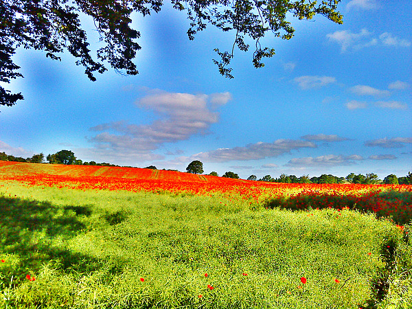 Poppy Field Photograph - Poppy Field by Sitara Bruns