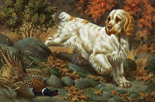 Illustration Photograph - Portrait Of A Clumber Spaniel Hunting by Walter A. Weber