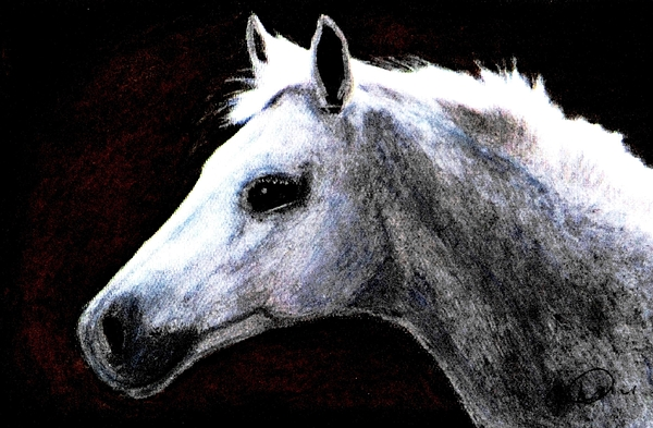 Black Drawing - Portrait Of A Pale Horse by Angela Davies