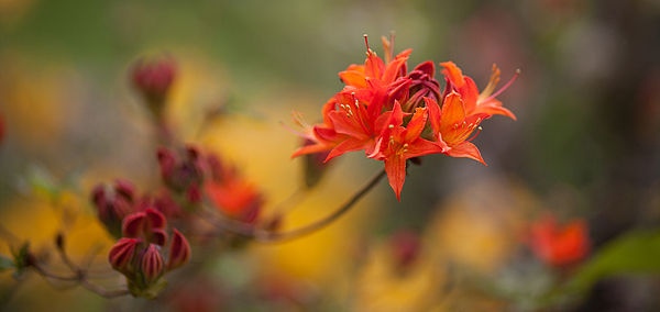 Rhodies Photograph - Potential by Mike Reid
