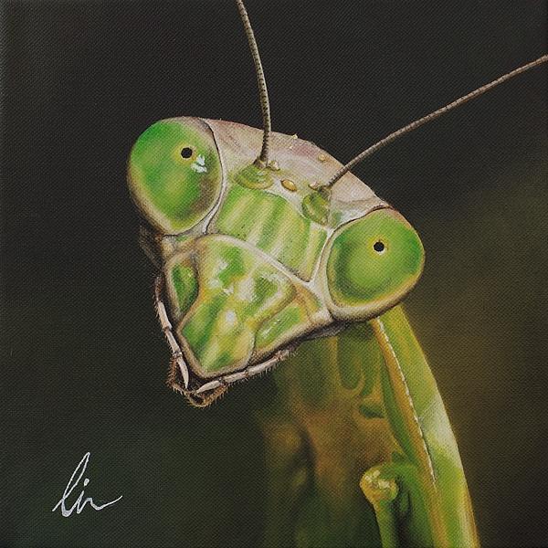 Praying Mantis Painting - Praying Mantis by Cindy D Chinn