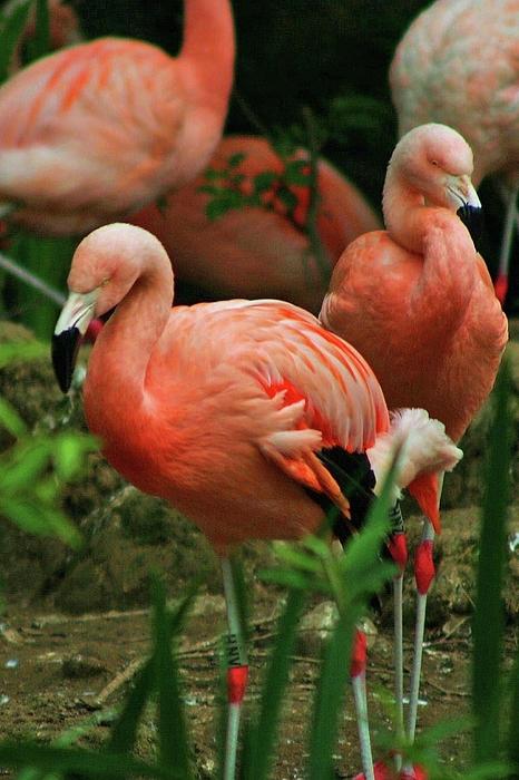 Pretty Photograph - Pretty In Pink by Martina Fagan