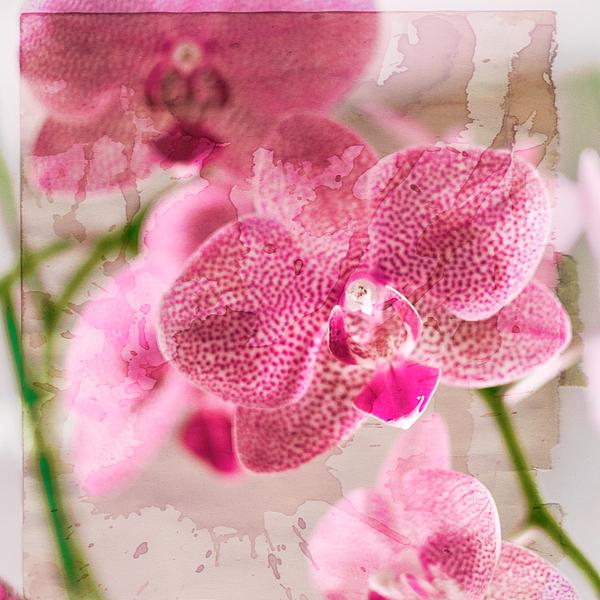 Flower Photograph - Pretty In Pink by Pamela Ellis