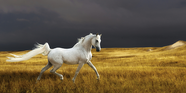 Landscape Photograph - Prince Of The Plains by Ron  McGinnis
