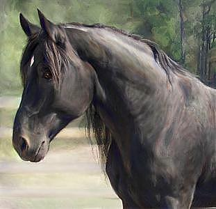 Horse Painting - Proud Black Stallion- Oil Portrait by Connie Moses
