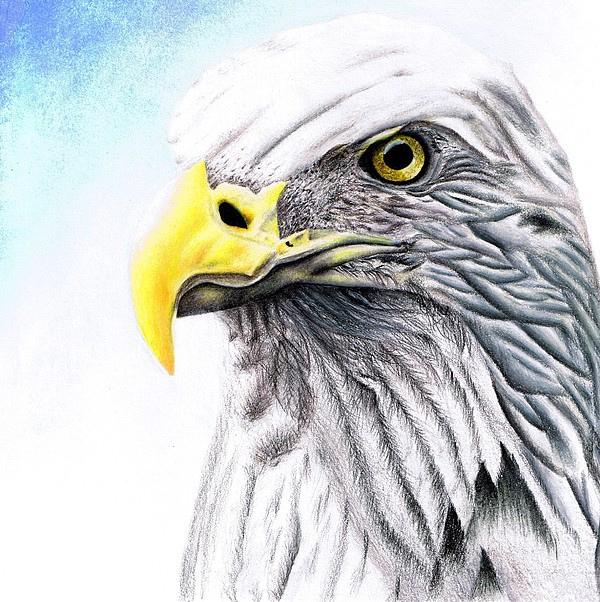 Eagle Drawing - Proud Eagle by Brandon Sharp